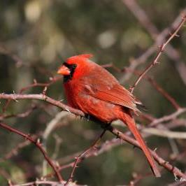 Great Backyard Bird Count @ Your Own Backyard